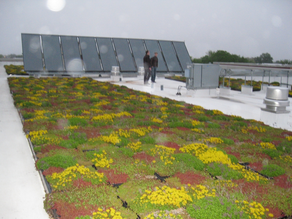 Green Roof Rosa Parks